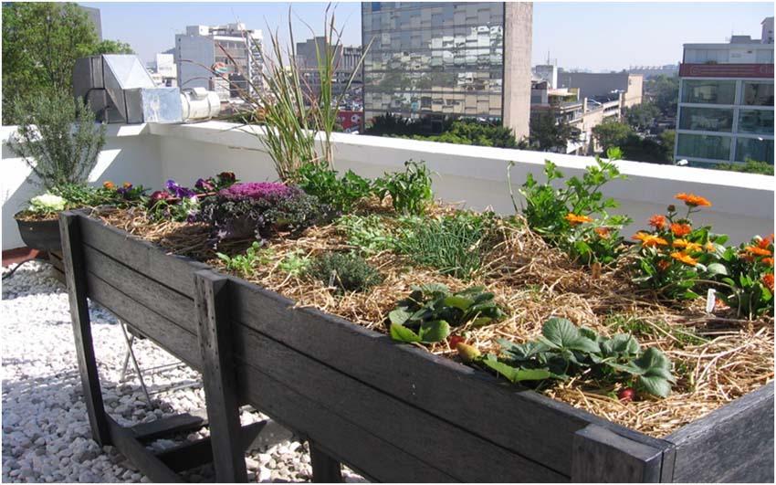 Curso huerto urbano ecol gico asociaci n blue planet for Asociacion cultivos huerto urbano