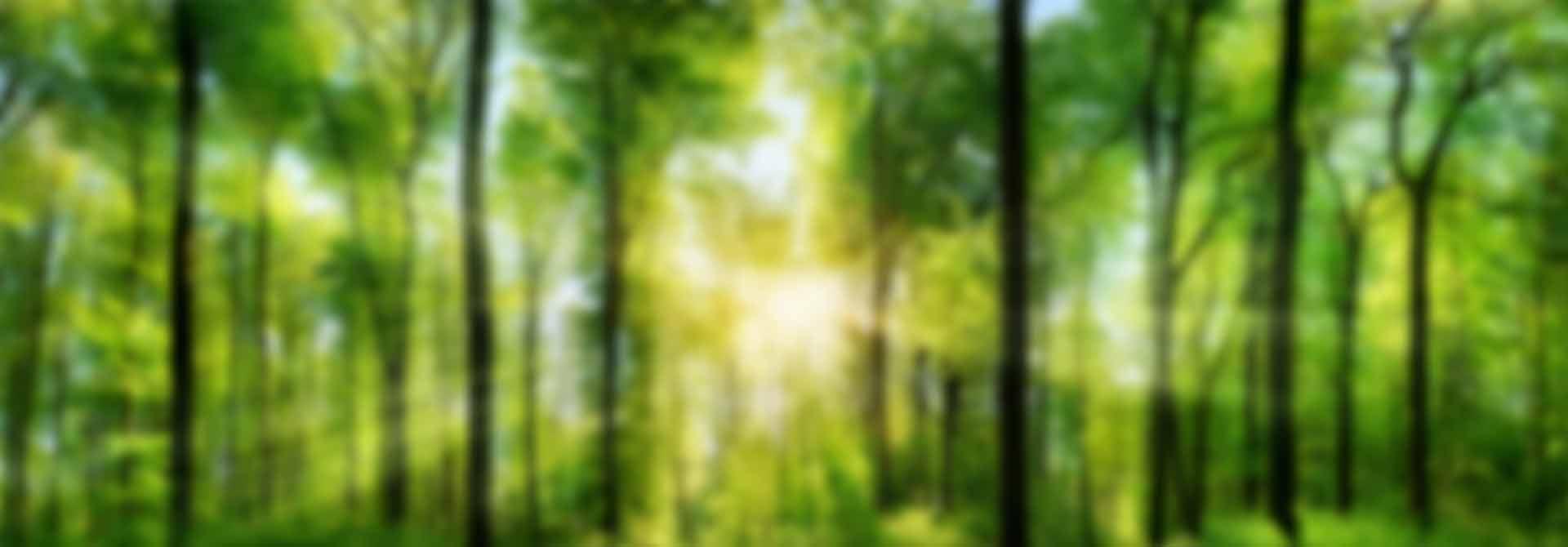 arboles-naturaleza-(1)-desef.
