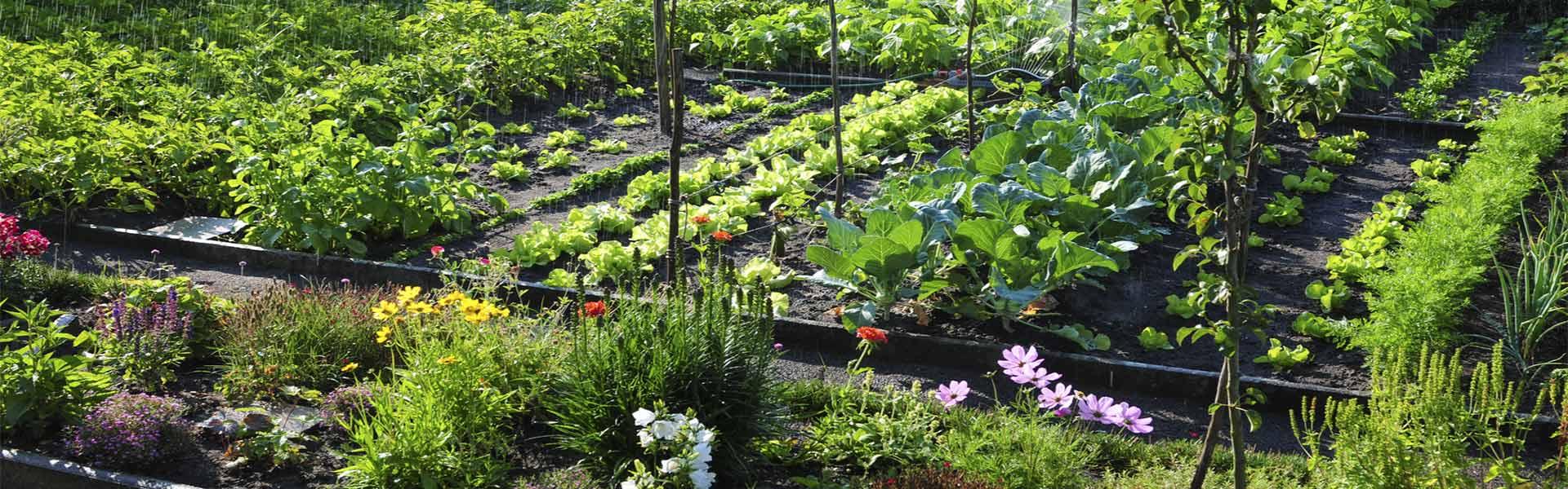 Curso huerto urbano ecol gico asociaci n blue planet for Asociacion de plantas en el huerto