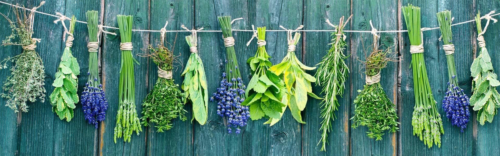 Curso plantas medicinales y arom ticas barcelona cursos for Asociacion de plantas aromaticas